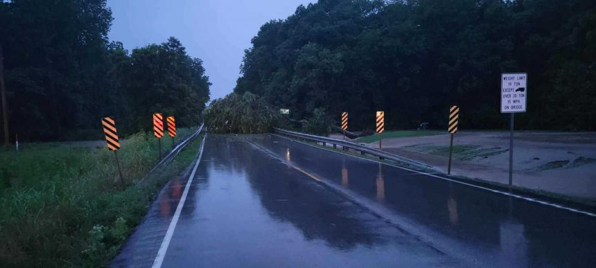 Tree blocks Highway 163