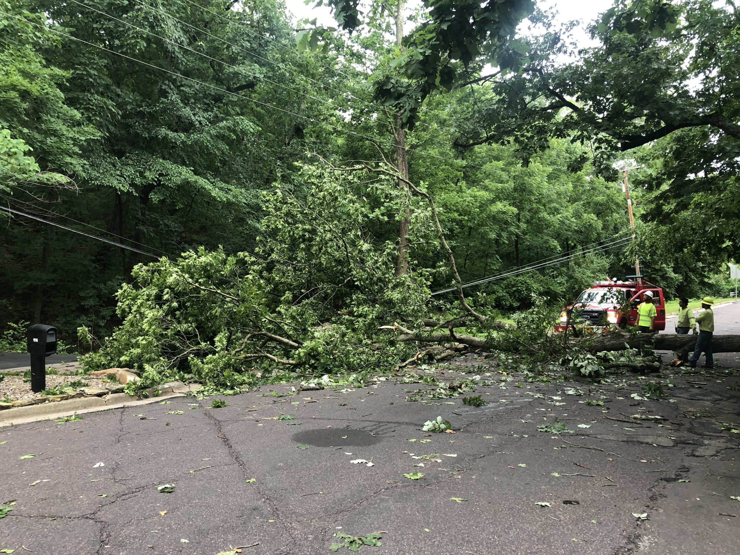 A tree sits on a power line on Highridge Drive in Columbia on Monday, June 21, 2021.