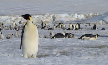 Luckily the penguins have remained covid-free.
