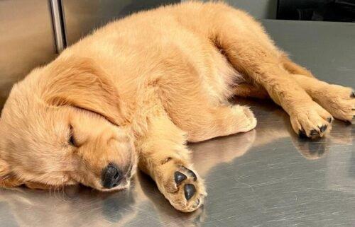 Pet owners face long waits