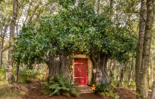 Winnie the Pooh's tree house was created to celebrate the 95th anniversary of the book character.